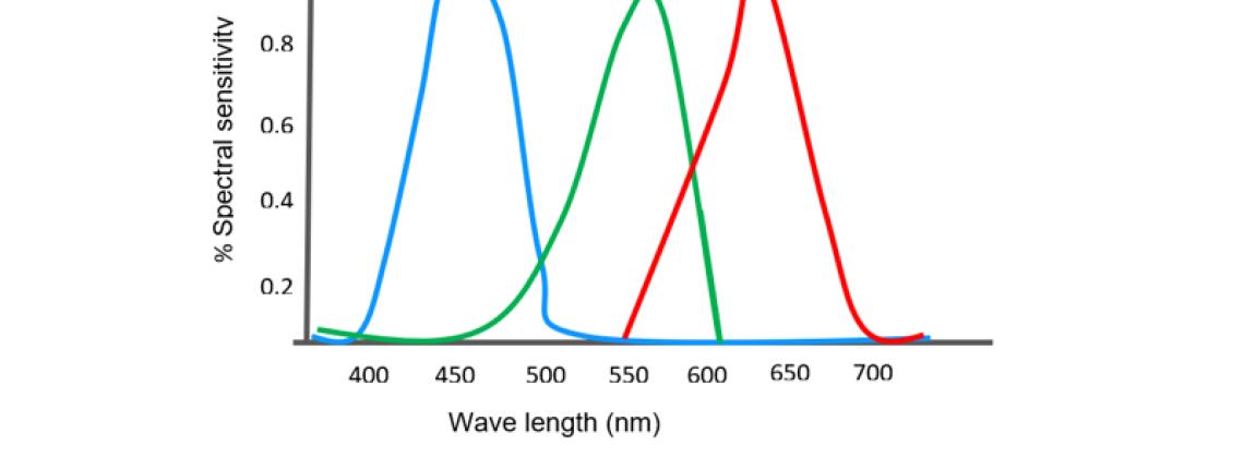 Spectral sensitivity curves of cameras